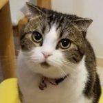 いつも口が半開きに見えるけど実は… 模様の位置で可愛さが増している猫さん「たしかにこれは口を開けてる影っぽく見える」 – Togetter