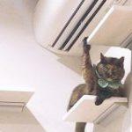 「はーい!」挙手でアピールしてくるサビ猫ちゃんがかわいすぎる件「何ですか~?」 – Togetter