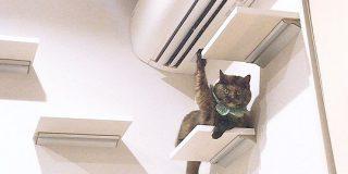 「はーい!」挙手でアピールしてくるサビ猫ちゃんがかわいすぎる件「何ですか~?」 - Togetter