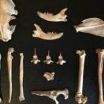 シルクロードで8世紀頃のネコの遺骨を発見!「初めて人に飼育されたネコ」の可能性も | ナゾロジー