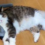 冷房の効きが悪いと『オニャー!!』とキレつつ走り回る猫さん→条件を記録したら不愉快ポイントが分かり改善される「今度から測ってみようかな」 – Togetter