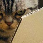 倍返しするときの半沢直樹さながらの表情をする猫さんがこちら「ニャイ返しだ」「大和田!」 – Togetter