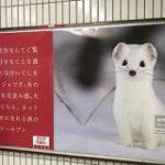 広告の概念をぶち壊す化粧品会社の広告「好きな動物はオコジョです。大好き。」 – Togetter