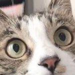 狩る気まんまんで猫じゃらしを見つめる猫さんの瞳孔が大きくなったり小さくなったり…「こんなに激しく動くの初めて見た」 – Togetter