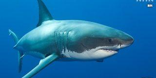 妻を襲ったサメを夫が殴って撃退 オーストラリア | NHKニュース