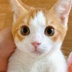 「風呂場にスライディング入室してきてお腹だけビショビショの猫」が可愛すぎて言語中枢が死んだ「あぁーー」 – Togetter