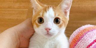 「風呂場にスライディング入室してきてお腹だけビショビショの猫」が可愛すぎて言語中枢が死んだ「あぁーー」 - Togetter