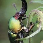 ジャポニカ学習帳に昆虫の表紙が復活→花に変わっていた理由は虫へのクレームだけではなかった「大和田常務が歓喜してる」 – Togetter