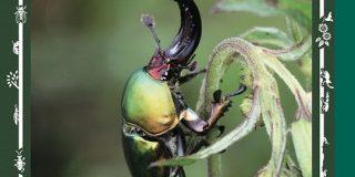 ジャポニカ学習帳に昆虫の表紙が復活→花に変わっていた理由は虫へのクレームだけではなかった「大和田常務が歓喜してる」 - Togetter