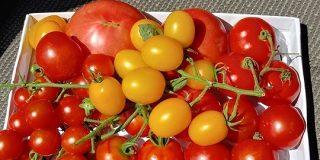 イタリア料理の歴史は2000年以上あるが、トマトが一般的に使われるようになったのはここ300年程度なの「それまでなに食ってたの!?」 - Togetter