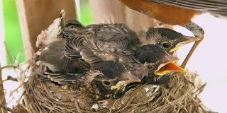 なぜ鳥の巣はうんちまみれにならないのか? - GIGAZINE