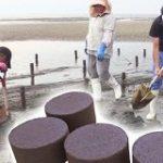 やっかいものが海の豊かさを取り戻す!? | NHKニュース