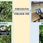 スマートグラスで農業を遠隔指導 ドコモが佐渡島で実験 新潟特産「おけさ柿」の栽培技術を後世に – ITmedia