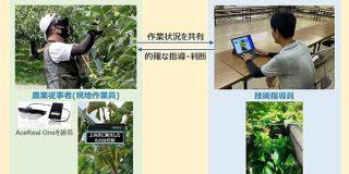 スマートグラスで農業を遠隔指導 ドコモが佐渡島で実験 新潟特産「おけさ柿」の栽培技術を後世に - ITmedia