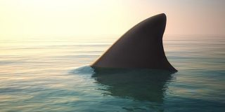進化史が覆る!?サメは硬骨魚の祖先から「あえて軟骨にシフトした」という研究 | ナゾロジー