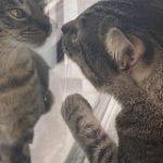 うちの猫にそっくりな猫がお隣に引っ越してきた!話しかけてくるような猫さんの表情がたまらない「魔女の宅急便のこのシーン」 – Togetter