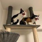 猫さんによる『掃除機を絶対に許さない会』 – Togetter