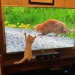 岩合さんの『世界ネコ歩き』を初めて見た猫さんのリアクションが可愛すぎる!「興奮を隠せない」「猫視点でもたまらないんだろうな」 – Togetter