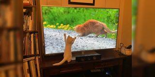 岩合さんの『世界ネコ歩き』を初めて見た猫さんのリアクションが可愛すぎる!「興奮を隠せない」「猫視点でもたまらないんだろうな」 - Togetter