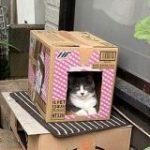 お母様が作った段ボールハウスに猫が入ったので写真を撮り、改めて見直してみたら後ろには…「おわかりいただけただろうか」 – Togetter