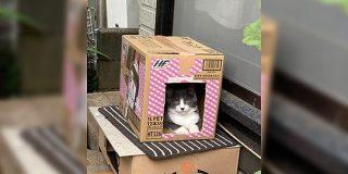 お母様が作った段ボールハウスに猫が入ったので写真を撮り、改めて見直してみたら後ろには…「おわかりいただけただろうか」 - Togetter