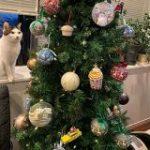 クリスマスツリーを前に緊張感高まるお写真がこちら「何も起きてないのに危機感を覚える一枚」「人間の完全敗北でしょ」 – Togetter