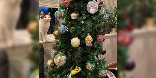 クリスマスツリーを前に緊張感高まるお写真がこちら「何も起きてないのに危機感を覚える一枚」「人間の完全敗北でしょ」 - Togetter
