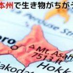 ヒグマは北海道にしかいない。 北海道と本州では生息する動物がちがう理由を知っていますか? – ナゾロジー