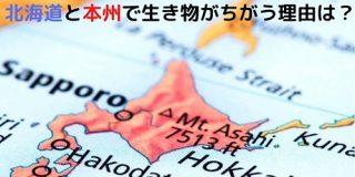 ヒグマは北海道にしかいない。 北海道と本州では生息する動物がちがう理由を知っていますか? - ナゾロジー