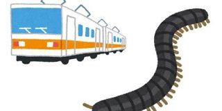数年ごとに大量発生して日本の列車を止めるヤスデ、「8年周期のライフサイクル」持っていたことが判明!(ムシ注意) - ナゾロジー
