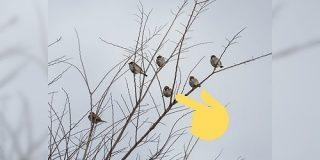 「キミだけつかまり方おかしいよ」何気なくスズメの群れを撮影したら一羽だけ様子のおかしいやつがいて超かわいい - Togetter