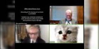 アメリカのオンライン裁判で猫の姿になってしまった弁護士あらわる『私は猫ではありません』と説明「申し訳無さそうな顔」 - Togetter