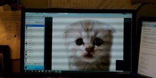 Zoomで弁護士をネコにしてしまったフィルターの正体は古いDELL製PCに搭載されていたソフトであったことが判明 - GIGAZINE