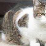 イギリス首相官邸のネコが減量へ 外出制限で太りすぎ | NHKニュース