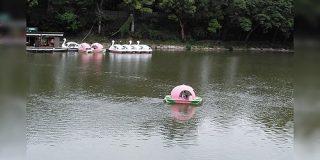 日本好きラトビア人「日本のオノマトペは大変。雨の降る音はたくさんあるし、桃が川から流れてくる音もある」 - Togetter
