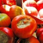 トマトの「尻腐れ果」ってすごい見た目だけど実はとても甘いんだよ、というお話「知らずに捨ててた」 – Togetter