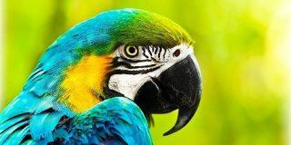 なぜ鳥は進化の中で「歯」を捨てたのか? - ナゾロジー