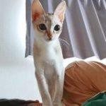 ほとんどの人が猫に気を取られて飼い主が顔面踏みつけられている事に気付かない写真→「ご褒美やん」「羨ましい」 – Togetter