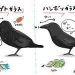 「ハシブト/ハシボソ」や「カモメ/ウミネコ」など、普段よく見かける鳥の見分け方イラストがわかりやすい&かわいくて話題に – Togetter
