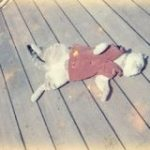 第1次南極観測隊として宗谷に乗船した『たけし(猫・オス・三毛)』が全力で「何もしないお仕事」をしていた記録「猫の話は初めて知った」 – Togetter