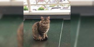 山口一郎「猫の画像下さい。」にリプライされた多数の大喜利画像 - Togetter