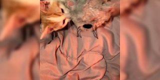友達(ぬいぐるみ)を寝かしつけてあげる猫さんの動画に悶絶する人々「大きくなっても一緒に寝るんだろうな」 - Togetter