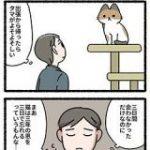 『猫は3年の恩を3日で忘れる』という話があるが、猫さん目線で見るとこういう事かも?→怒られエピソードも「5分のコンビニでもちゃんと報告しないと」 – Togetter
