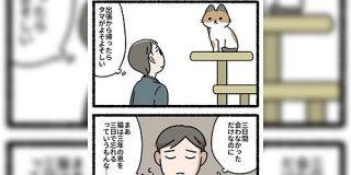 『猫は3年の恩を3日で忘れる』という話があるが、猫さん目線で見るとこういう事かも?→怒られエピソードも「5分のコンビニでもちゃんと報告しないと」 - Togetter