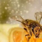 花はハチの音が聞こえると、一時的に「蜜を甘くしよう」とがんばる – ナゾロジー