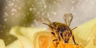 花はハチの音が聞こえると、一時的に「蜜を甘くしよう」とがんばる - ナゾロジー