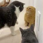 「スゴい…短いお手々で全てのパンチをガードしている」人類よ、これが『鉄壁』だ。猫拳マスターのディフェンスを見よ – Togetter