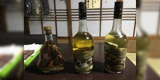 奄美大島のおじいさんは酒が飲みたくなるとハブを捕まえに行くらしい→ハブ酒を作るわけではなかった「討伐クエストじゃん」 - Togetter