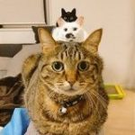 「ジェットストリームアタックにゃ!」綺麗に縦一列に並ぶお猫さまの姿に見覚えのある人たち – Togetter