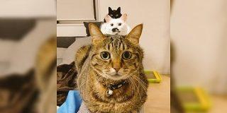 「ジェットストリームアタックにゃ!」綺麗に縦一列に並ぶお猫さまの姿に見覚えのある人たち - Togetter